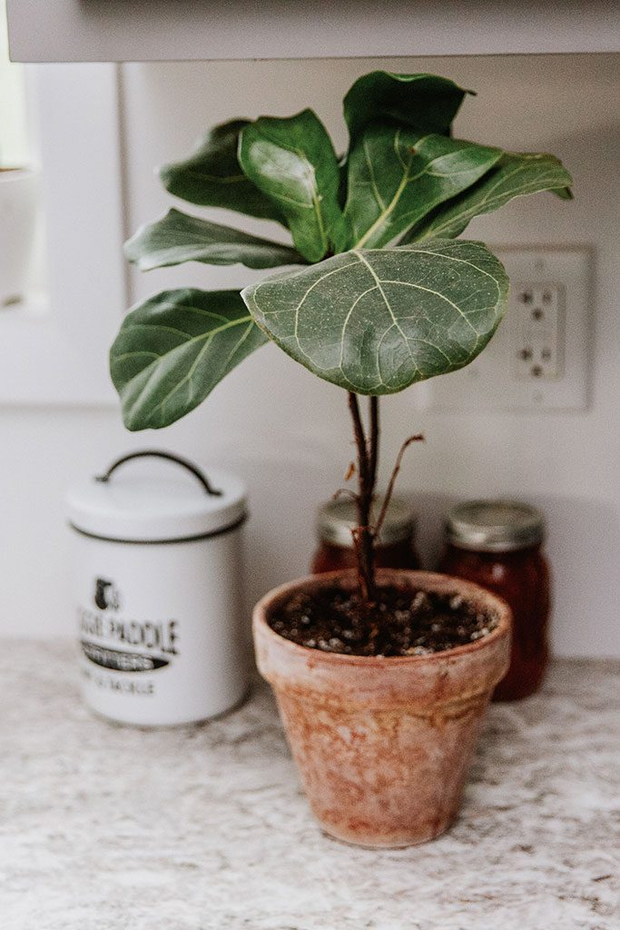 Green plants add color to the neutral color scheme.